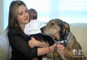 dog-saves-baby-life-1